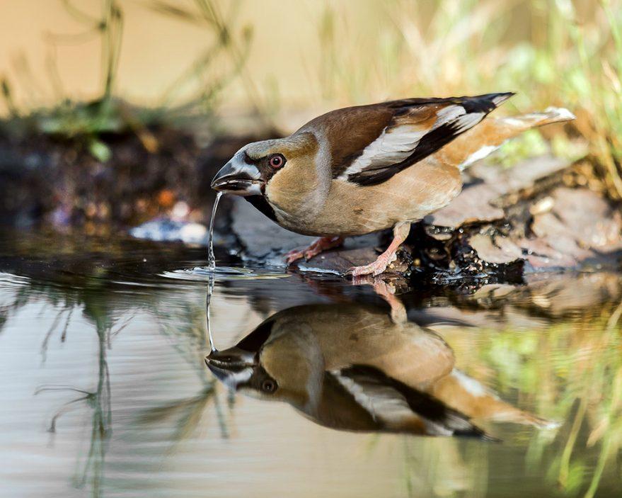 fotos aves ataria salburua exposicion