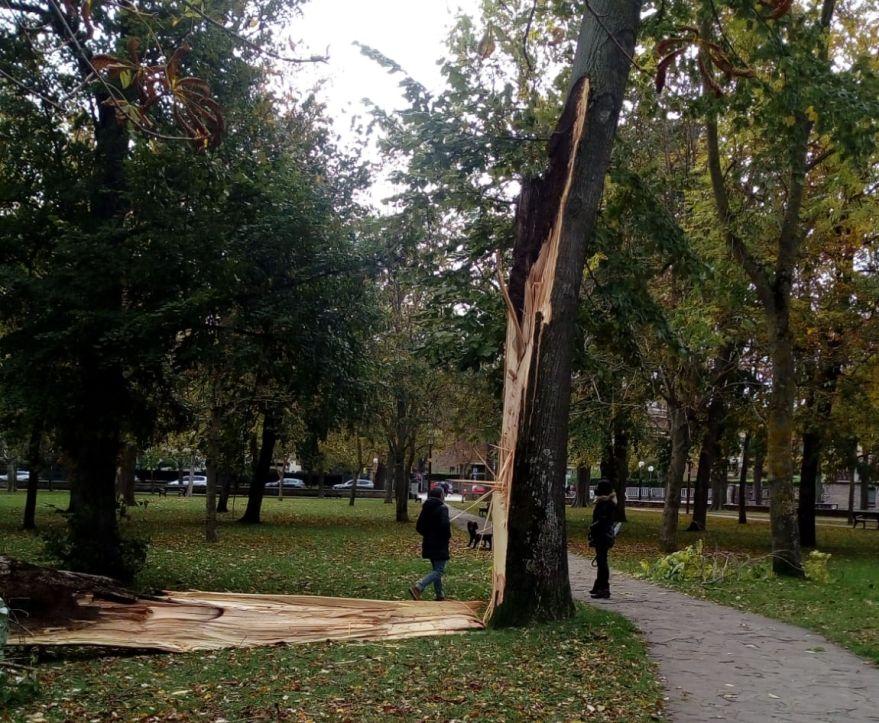 Árbol roto en el Parque del Prado