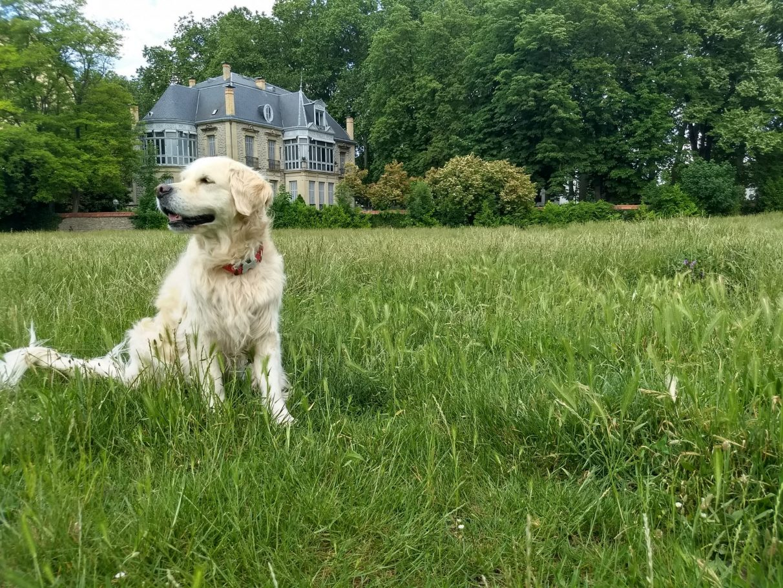 perro-vitoria-pet-fliendly