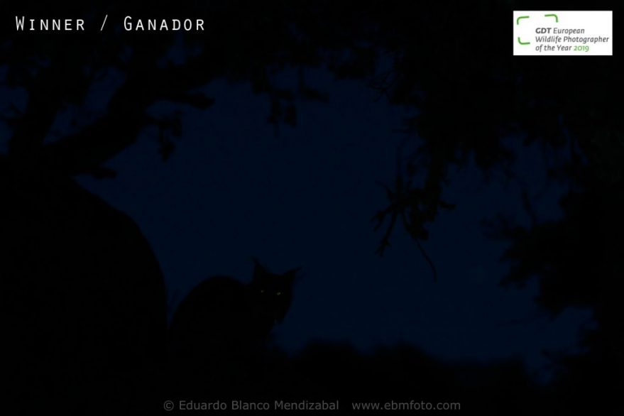 Eduardo Blanoc Méndizabal - El fantasma