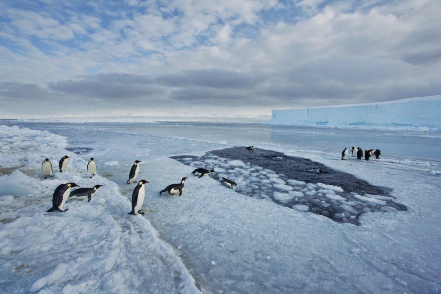 Pingüino emperador. Cabo Washington, mar de Ross (Antártida)