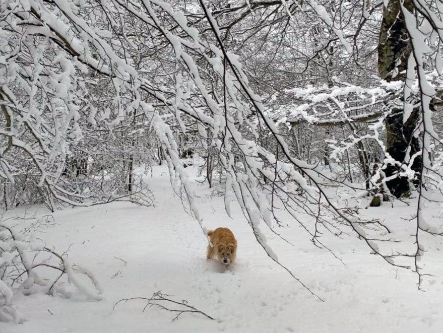 nieve-en-alava-alda-montana-alavesa
