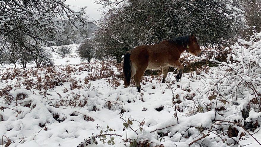nieve-en-alava-opakua-agurain