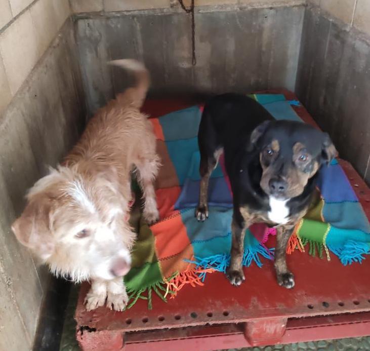 apasos recogida mantas perrera