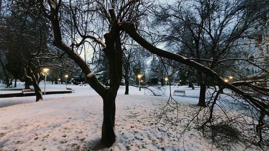 nieve vitoria arbol roto