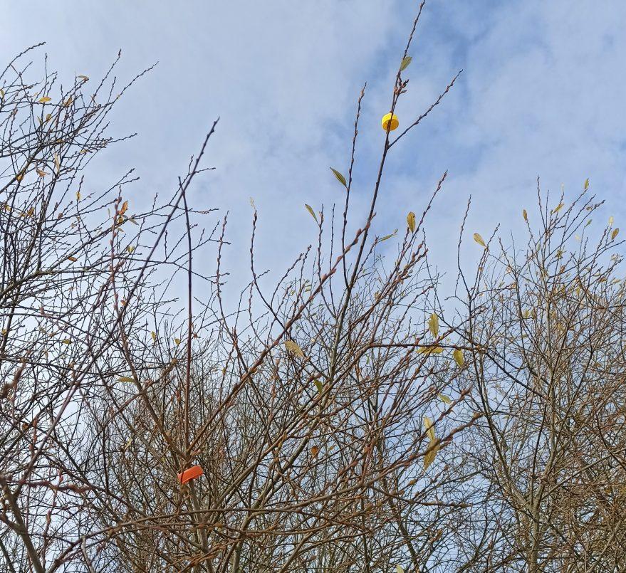 plasticos arboles zabalgana