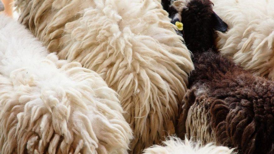 lana oveja abono