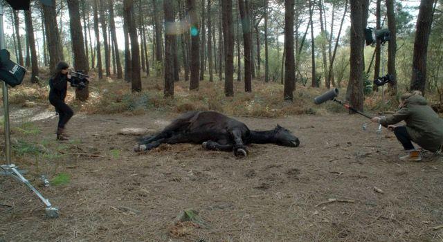Si cae caballo, cae imagen