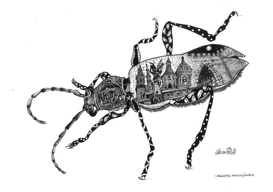 Porteadores-de-Historia Anaglyptus-misticus- Vitoria