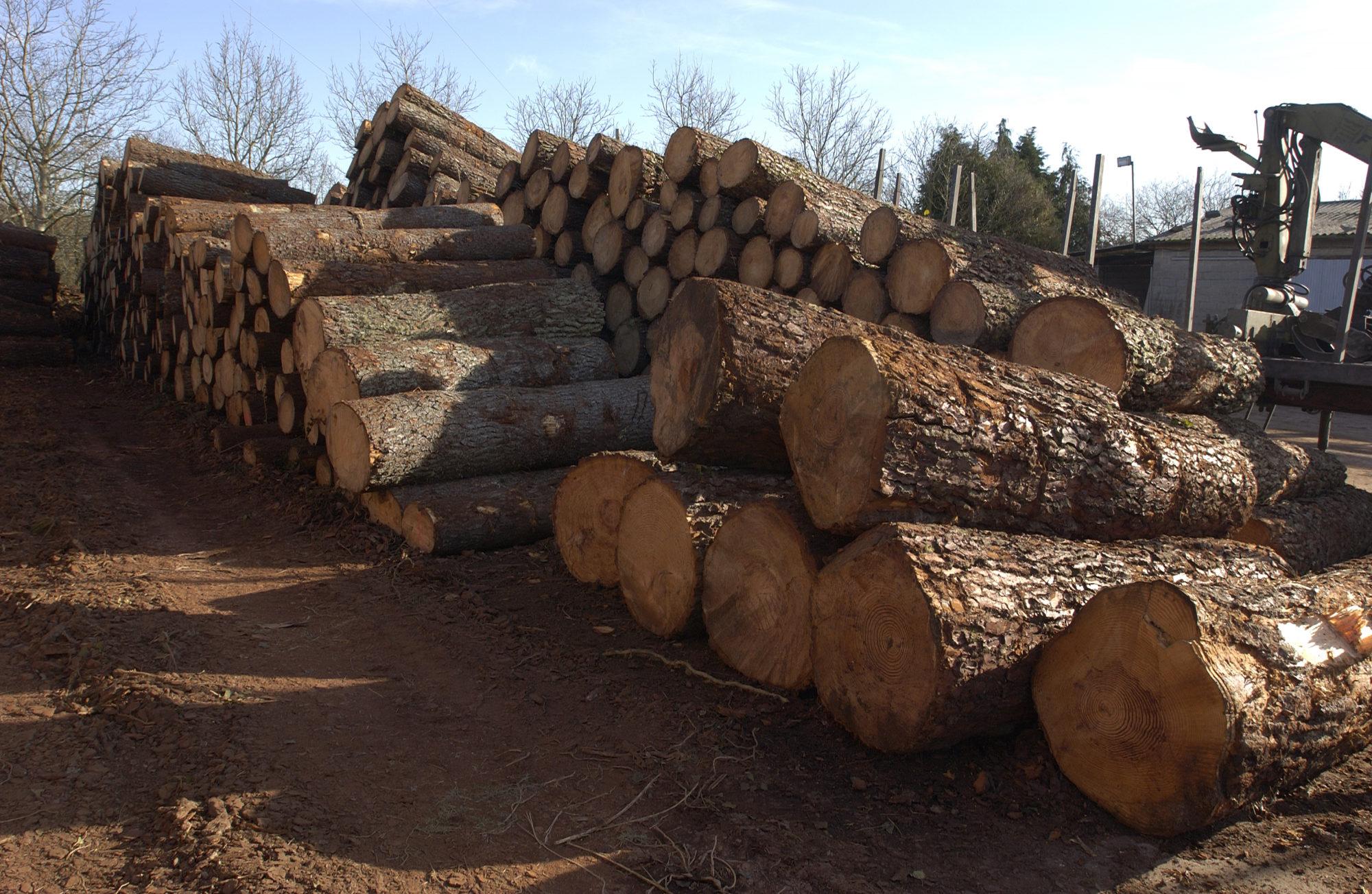 madera-alava